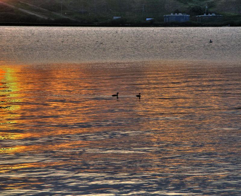 Ducks at sunset Blackstrap.jpg