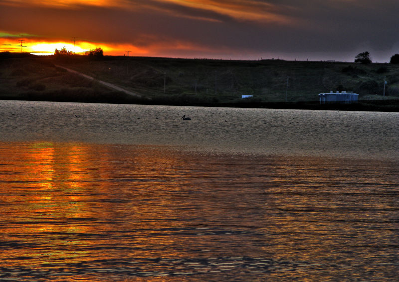 Pelican at sunset Blackstrap.jpg