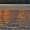 Ducks at sunset Blackstrap.jpg